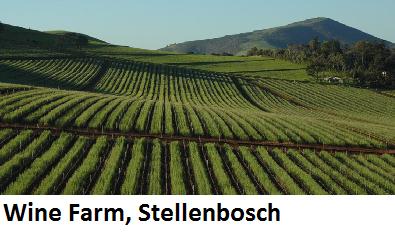 Wine Farm Stellenbosch.png